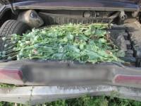 Ветлужские полицейские установили факт незаконного хранения наркотиков