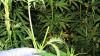 В Нижегородской области сотрудники наркоконтроля задержали мужчину, причастного к сбыту наркотиков